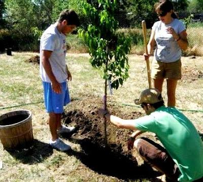 Foto alusivo al Día Forestal Mundial o Día Internacional de los Bosques