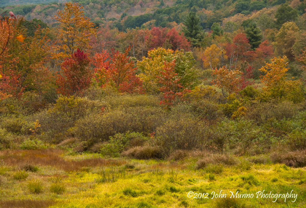 Birch Trees Shine Golden In This Field At Brian Hill State