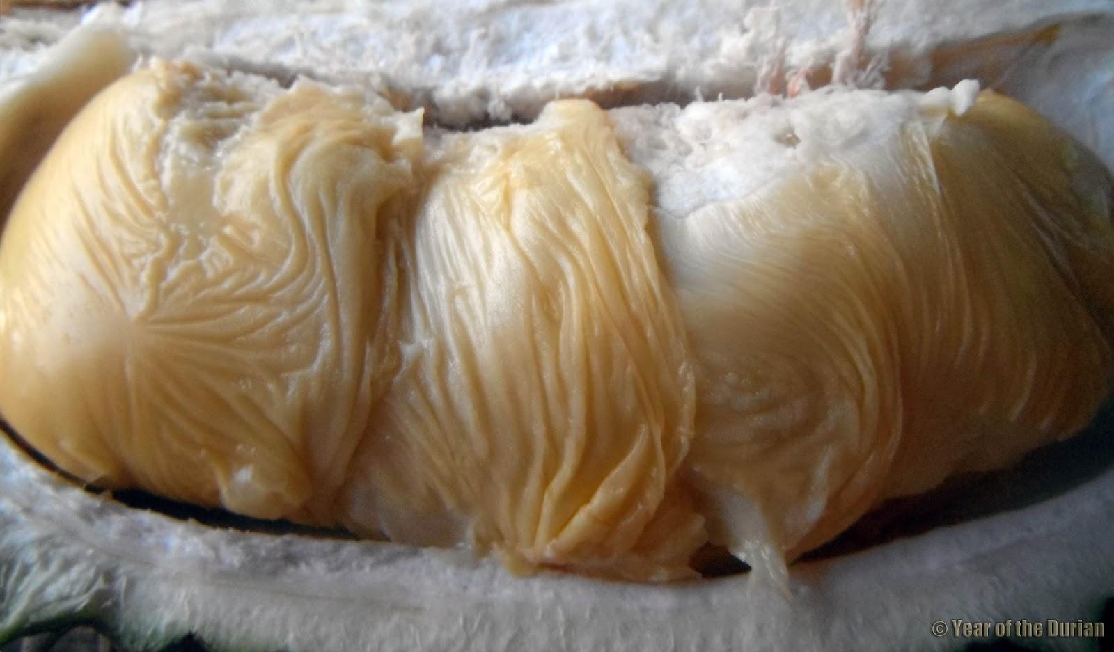 Durian Porn  D-18-3905