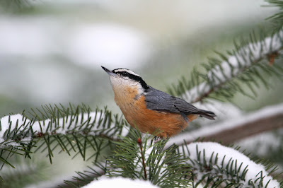 Peggy Collins Photography Birds In Snow In My Backyard