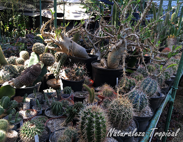 Colección personal de plantas crasas en un vivero