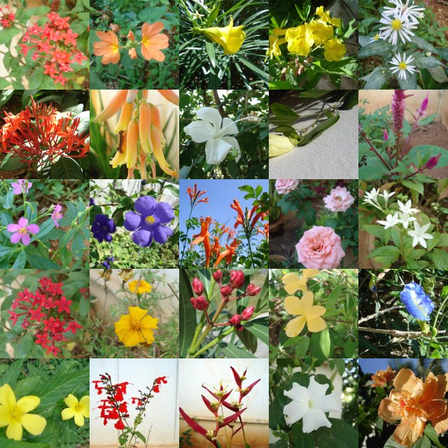 Different Types Of Flowers: Romantic Flowers: Flower Types