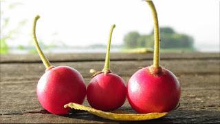 gambar buah kersen, talok