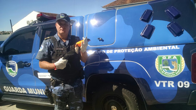 Tucano é resgatado pela Guarda Municipal Ambiental de Botucatu
