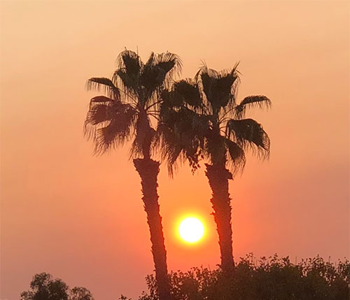 Smoky skies and sun sets between two palm trees (Source: Palmia Observatory)