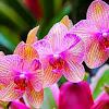 Cara Merawat dan Macam-Macam Bunga Anggrek