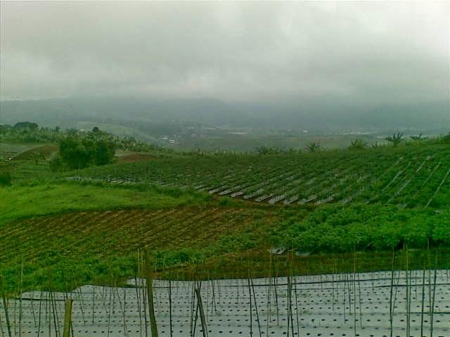 Foto(5190) Jual Tanah Milik | Kebun 23 Ha, Lokasi Puncak jual tanah di puncak