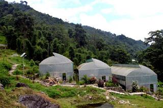 Tropical Nursery Mungpoo