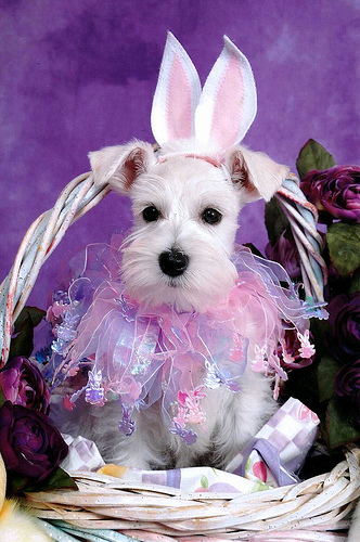 Photos: Adorable Pets Celebrate Easter