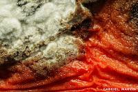 macro photos of molds