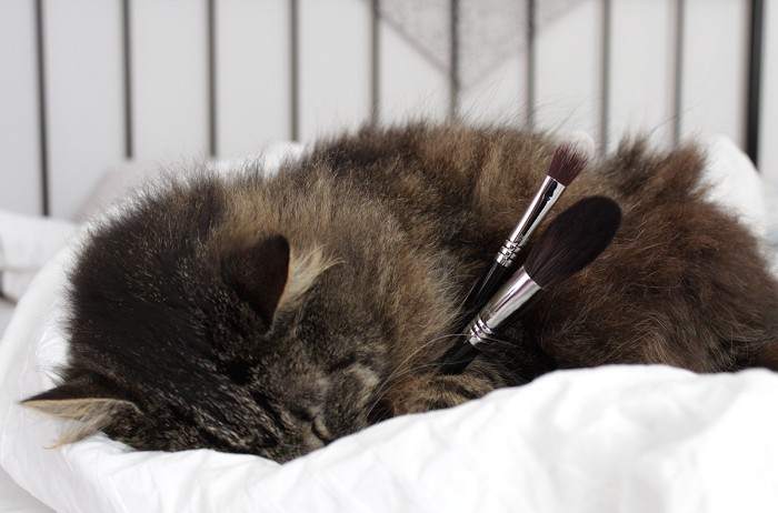 soft cruelty-free Sigma brushes
