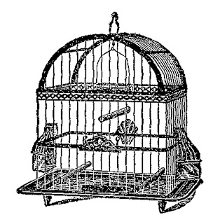 birdcage bird image clip art download illustration