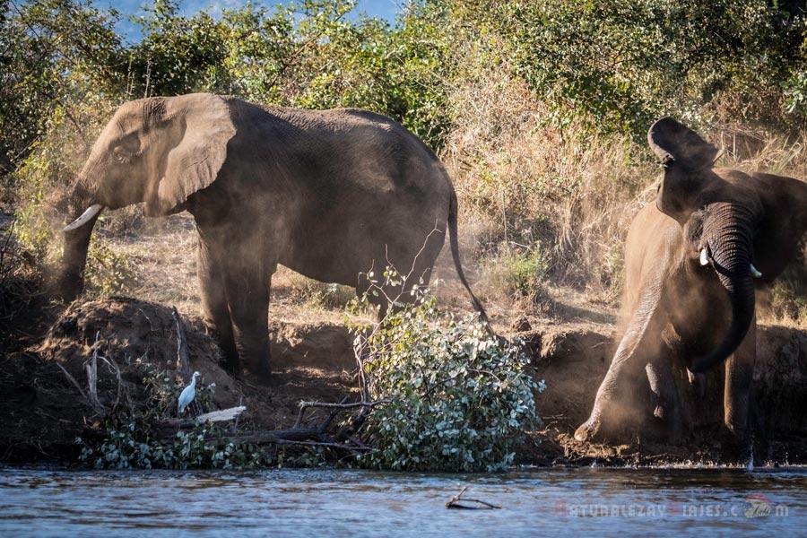 Elefantes Zambezi, Zambia