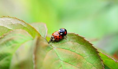 Böcekler Neden Ters Dönerler, Böcekler, Böceklerin Kas Yapısı