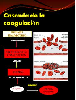 COAGULACION PDF LA DE CASCADA