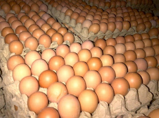 Peluang Usaha Agen Telur Ayam Sukses