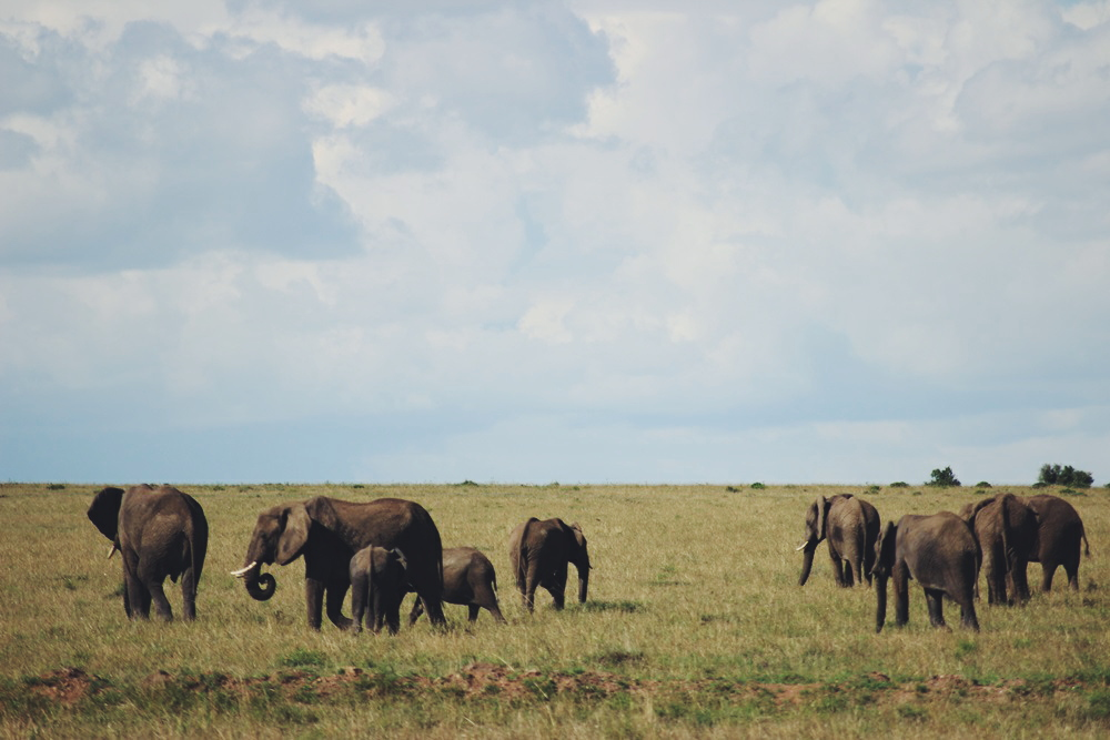 yvonne-karnath-masai-mara-nationalpark-safari-kenya-kenia-reise-bericht-blog