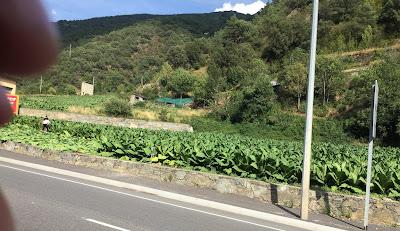 Straße im Hintergrund Bauern bei der Tabakernte in Andorra