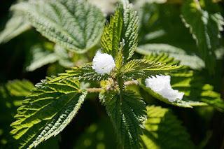 Allergies saisonnières: 4 remèdes naturels et maison