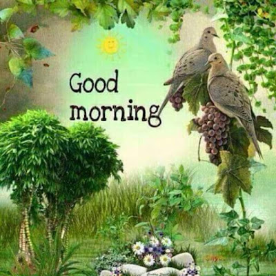 Sweet Pigeon Pair with Good Morning Whatsapp