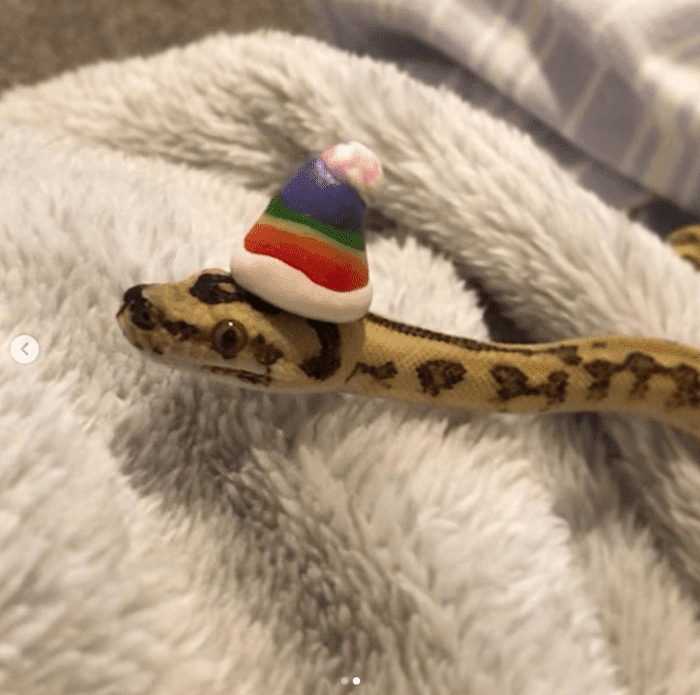 20 Adorable Pictures Of Snakes To Help You Get Over Your Fear