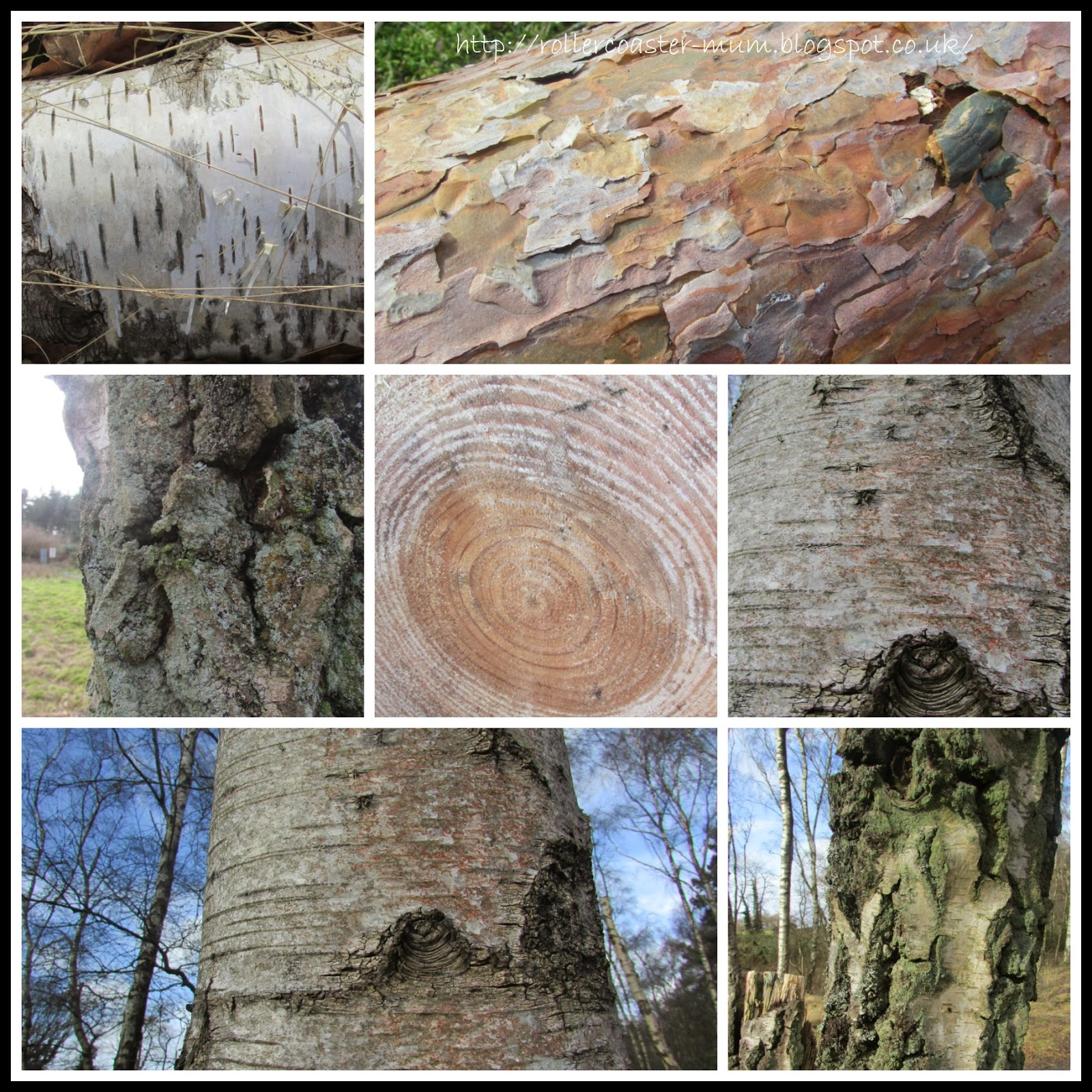 textures of tree bark