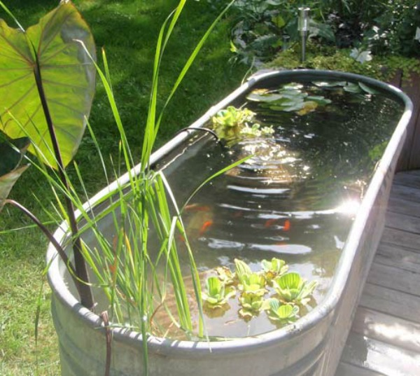 Patio gardening 101 cozy little house for Build your own fish pond