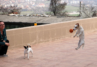 Thelma leaping for the ball