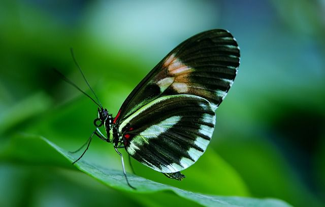 is the biggest butterfly garden inwards Bali in addition to too inwards Republic of Indonesia in addition to Southeast Asia for the  DestinationsinBali; Bali Butterfly Park (Taman Kupu Kupu Bali) inwards Tabanan Regency