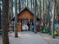 Foto Foto Hutan Pinus Mangunan yogyakarta