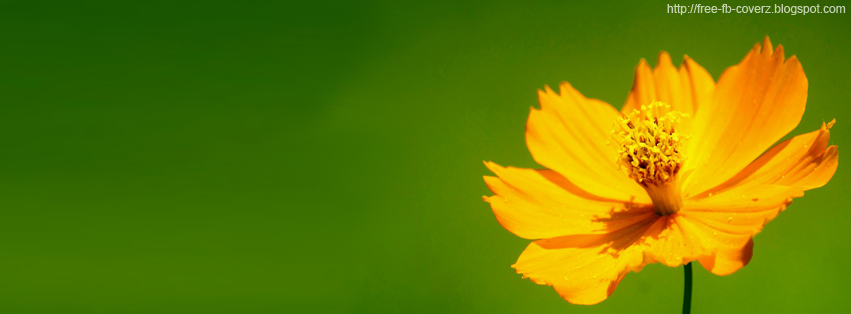 Yellow Flower Facebook Cover