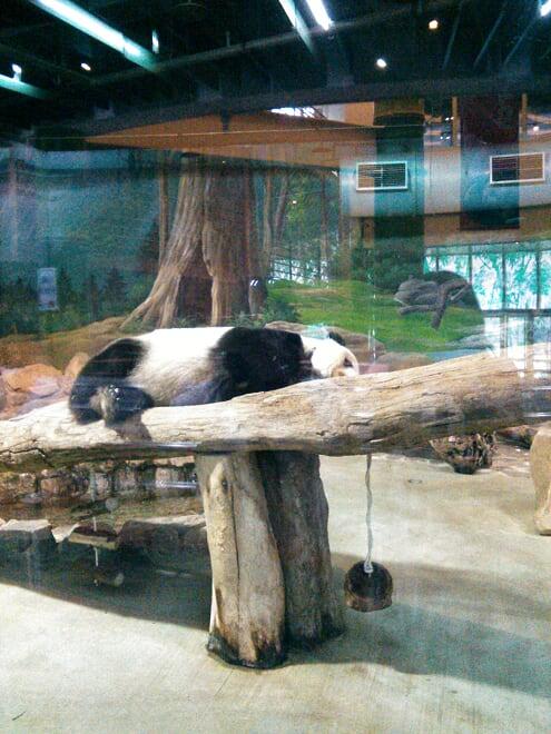 Panda Taiwan