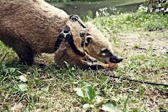 Nutrie, sowy, ostronosy i wielkie świnie, czyli ciekawe zwierzęta można spotkać w Warszawie