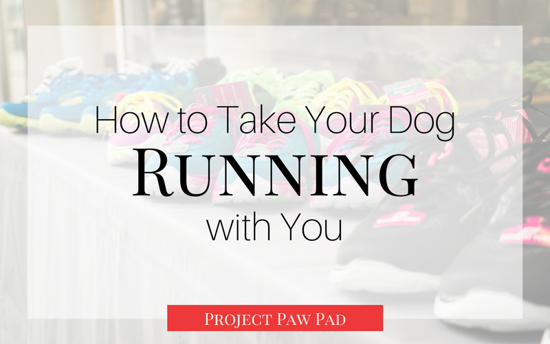 I love taking my dogs running with me and involving them in my workout routine! Check out this post to see some awesome tips to bring your dogs with you on your run so you can get health and in shape together!