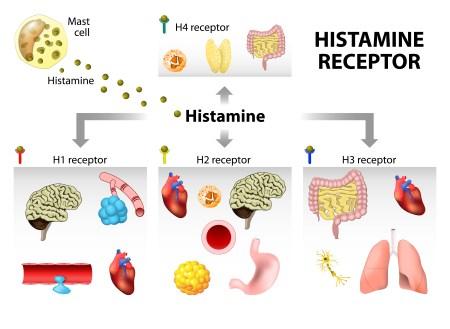 Гистамин секс