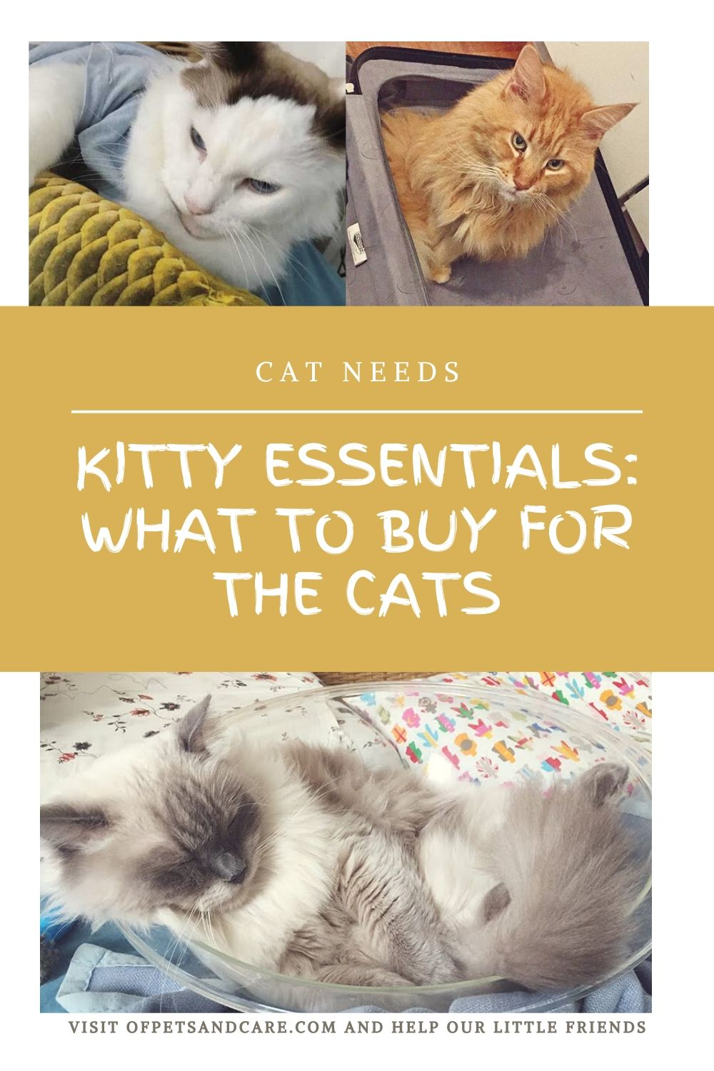 kitty gifts