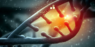 Genetic signatures of biological aging detected planet-today.com