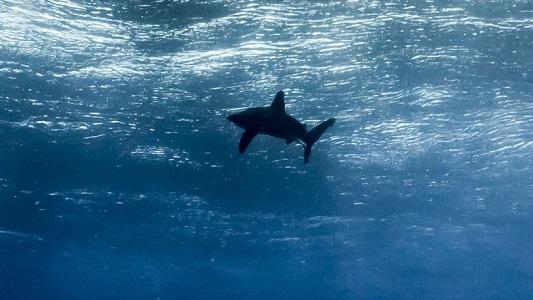 Okyanus Nedir? Hakkında Bilgi