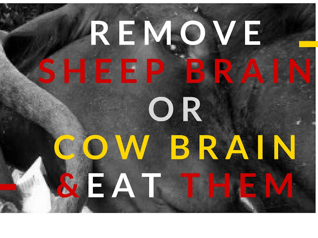 how to remove sheep brain or cow brain