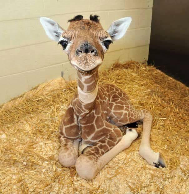 lindos%2Banimais%2Bbebe%2B%2B%252825%2529 - Os filhotes de animais mais lindinhos que você já viu!