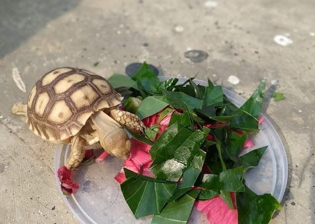 Chế độ ăn cho rùa khỏe mạnh