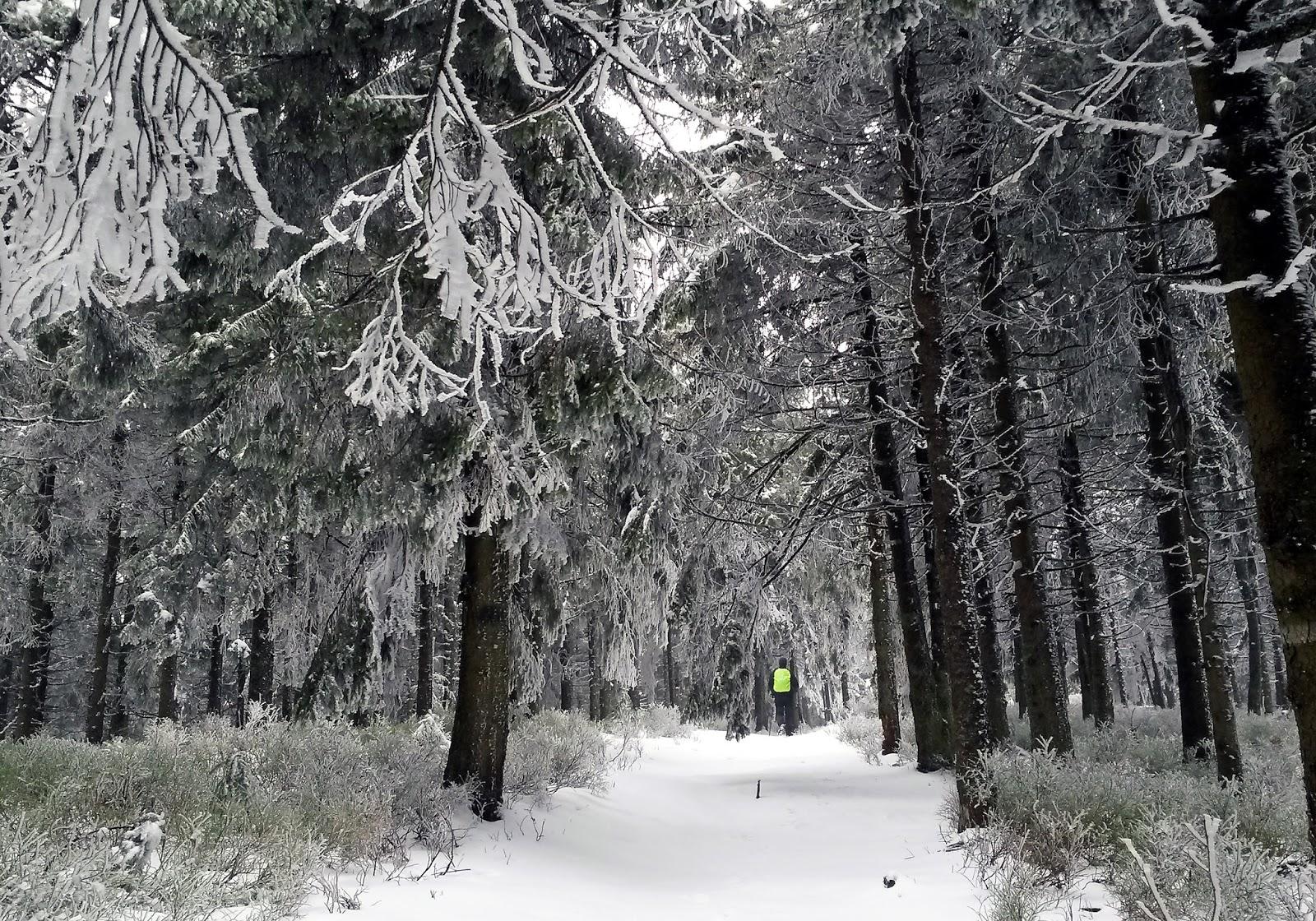 Góry Las Radziejowa Beskid Sądecki