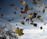 Resultado de imagen de remolino de hojas secas b/n