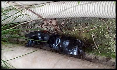 アリの巣配管どける前