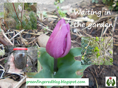 Six on Saturday The Green Fingered Blog