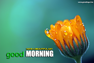 beautiful good morning nature flowers with greetings message