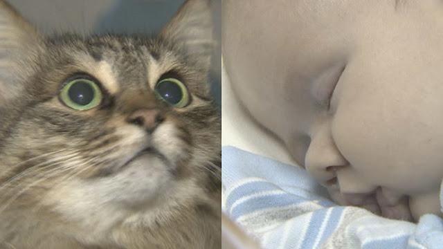 Una gata da calor a un bebé y evita que muera congelado