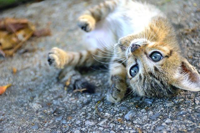 Umur Anak Kucing Boleh Dimandikan Disertai Bagaimana Cara