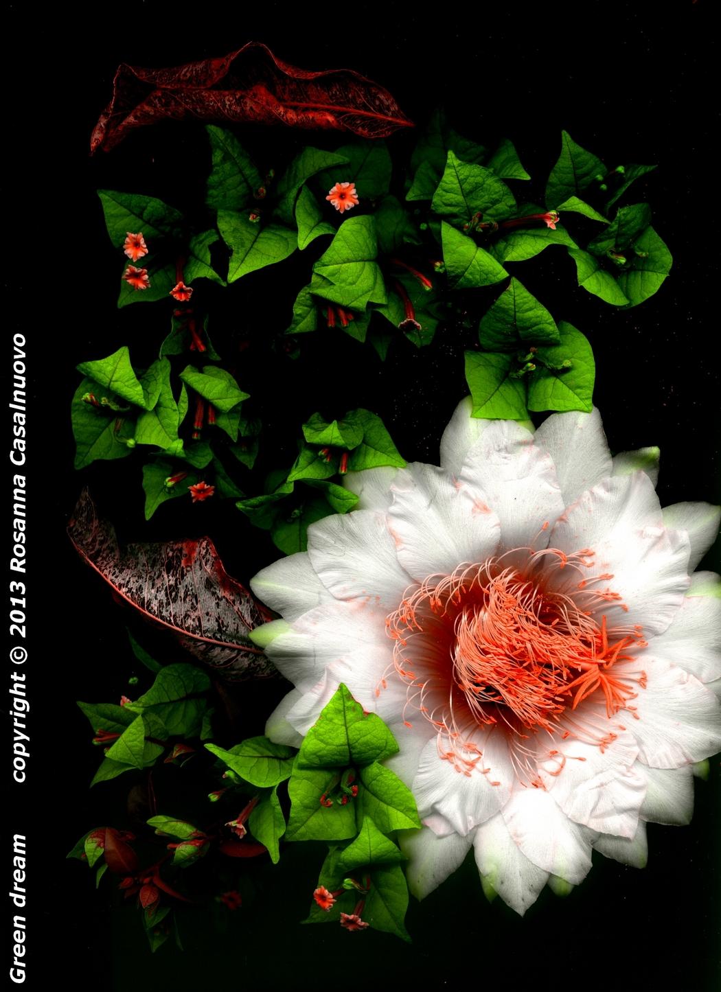 scannografia fiori bougainvillea cactus manipolazione colori