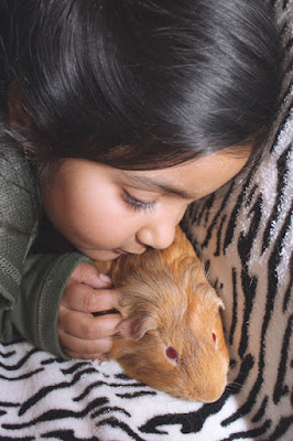 An Asian girl cuddles her pet guinea pig